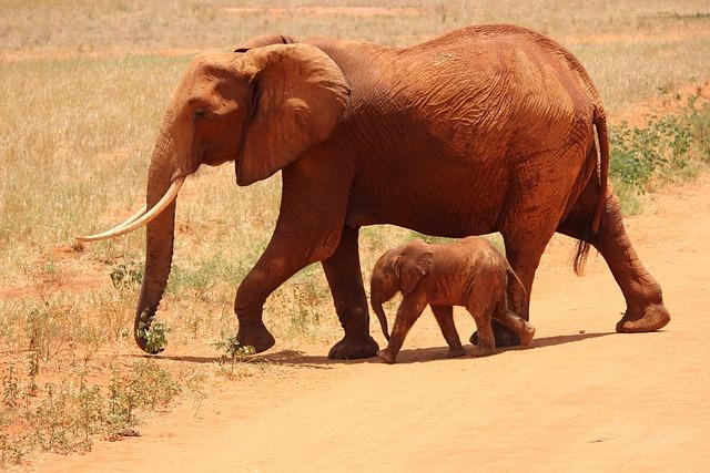 Elephant, Cub, Tsavo, Kenya, Savanna