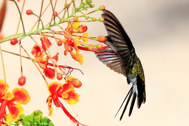 Hummingbird, Cuba, Wildlife