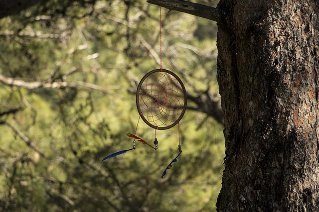 Dreamcatcher, Forest, Tree, Culture, Dream, Feather