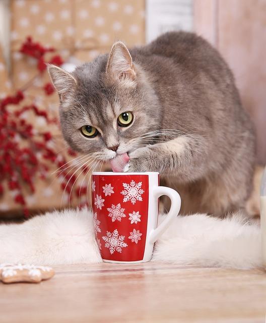 Cat, Tomcat, Christmas, Animal, Cup