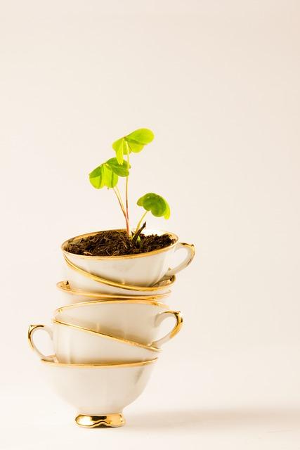 Tea, Cup, Plant, Four-leaf Clover
