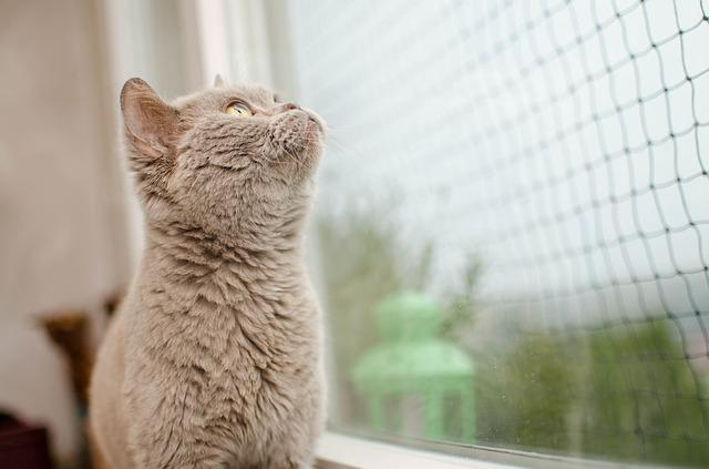 Cat, The Grid, Window, Domestic Cat, Curiosity