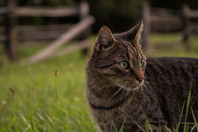 Animal, Mammal, Cat, Cute, Nature, Curious, Farm
