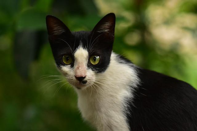 Cat, Eyes, Whiskers, Fear, Curious, Animal, Cute