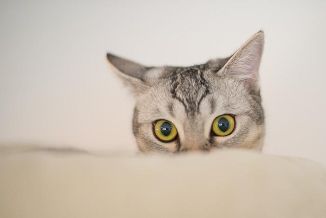 Animal, Cute, Cat, Kitten, Curious, Funny, Sweet, Eyes