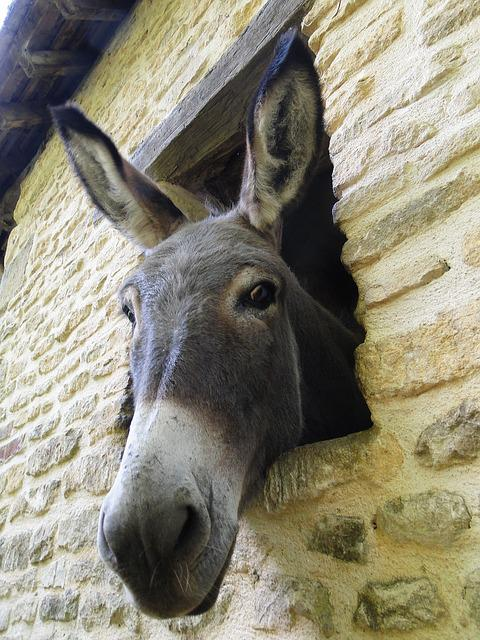 Donkey, Look, Nice, Curious, Equine, Soft, Grey, Nature