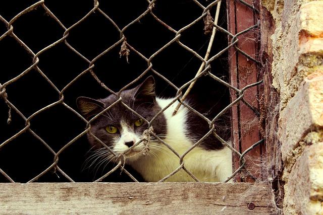 Cat, Curious, Window, Grating, Feline, Grey