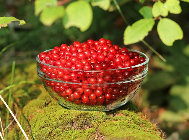 Currant, Moss, Forest, Berry, Summer, Tree, Cup