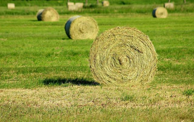Hay, Cut Grass, Haymaking, Agriculture, Round, Nature