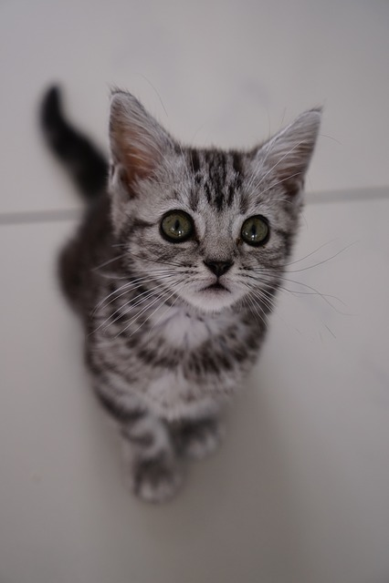 Cat, Cute, Animal, Pet, Kitten, Baby Cat, Young Kittens