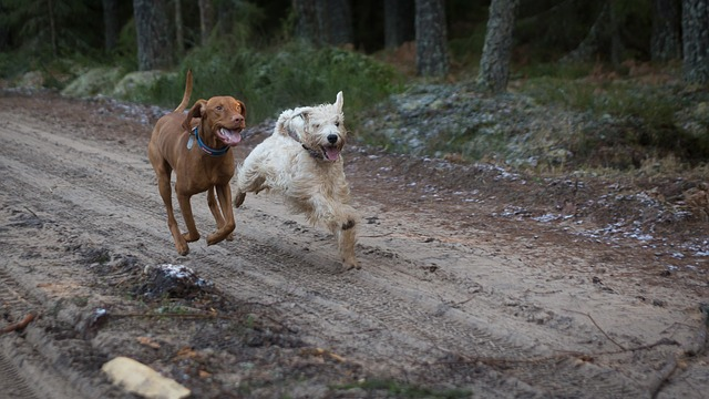 Animal, Mammal, Nature, Outdoors, Cute, Running