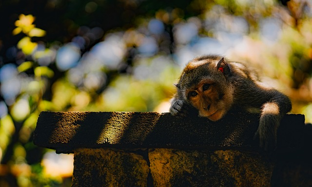 Monkey, Animal, Wildlife, Cute, Adorable, Thoughtful