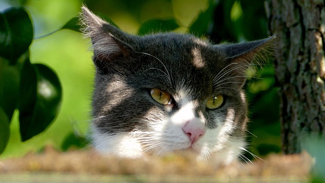 Cat, Pet, Animal, Cute, Black And White Cat, Cat Face