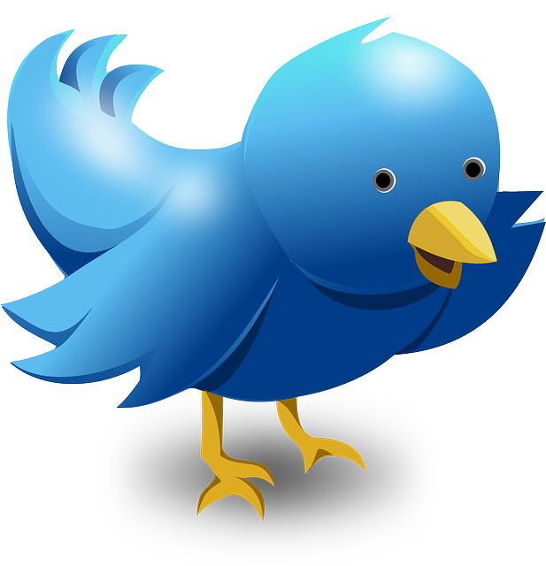 Twitter, Tweet, Bird, Funny, Cute, Blue, Messaging