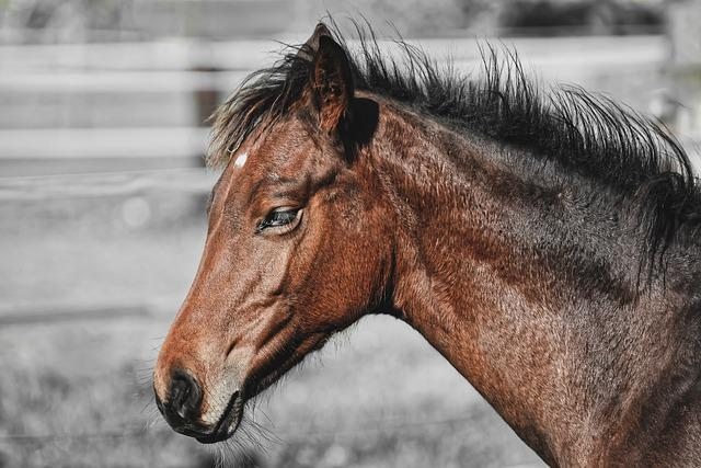 Foal, Horse, Small Horse, Brown, Cute, Portrait