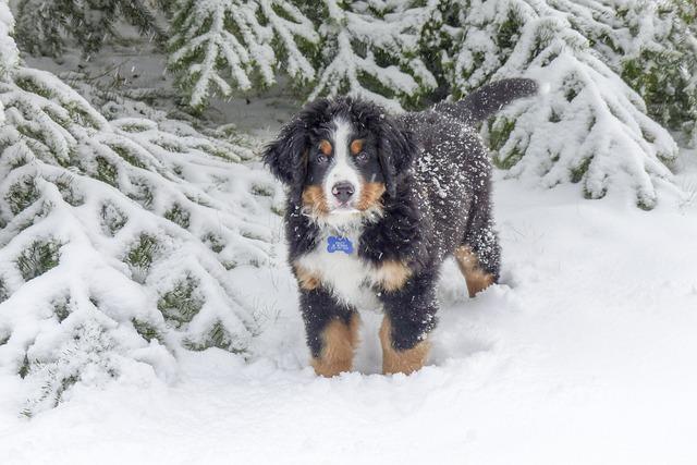 Dog, Puppy, Pet, Canine, Cute, Animal, Purebred