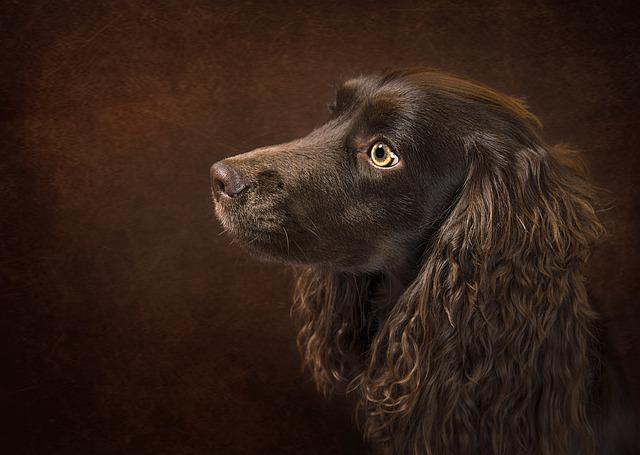 Dog, Portrait, Animal, Pet, Puppy, Brown, Canine, Cute