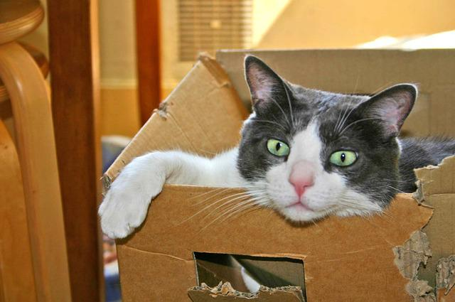 Cat, Carton, Cute