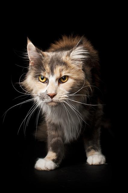Cute, Cat, Animals