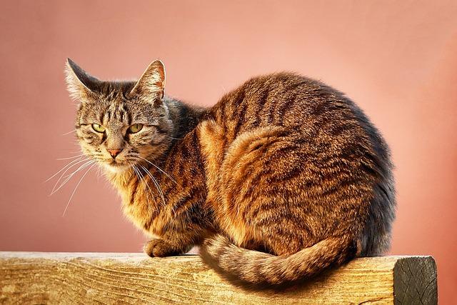 Cat, Animal, Pet, Cute Cat, Orange, Portrait