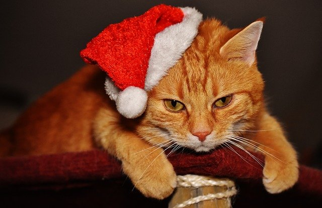 Cat, Red, Christmas, Santa Hat, Funny, Cute, Mackerel