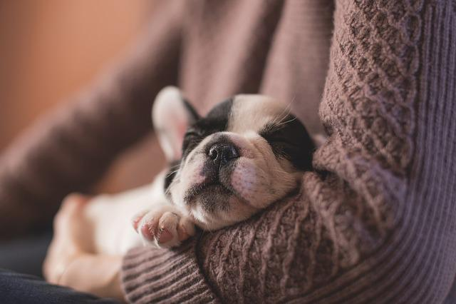 Adorable, Animal, Canine, Cute, Dog, Pet, Puppy, Sleep