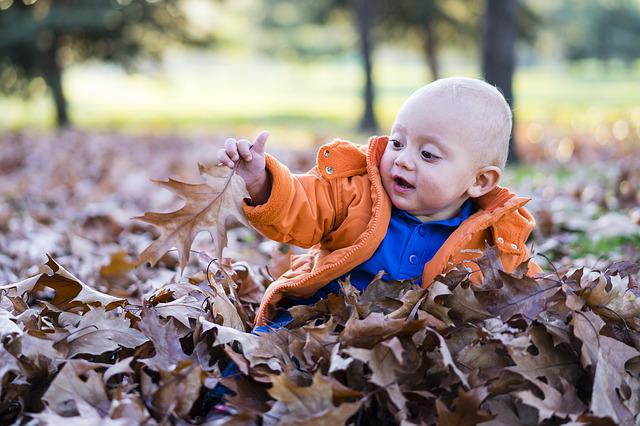 Child, Forest, Playing, Dry Leaves, Foliage, Fun, Cute