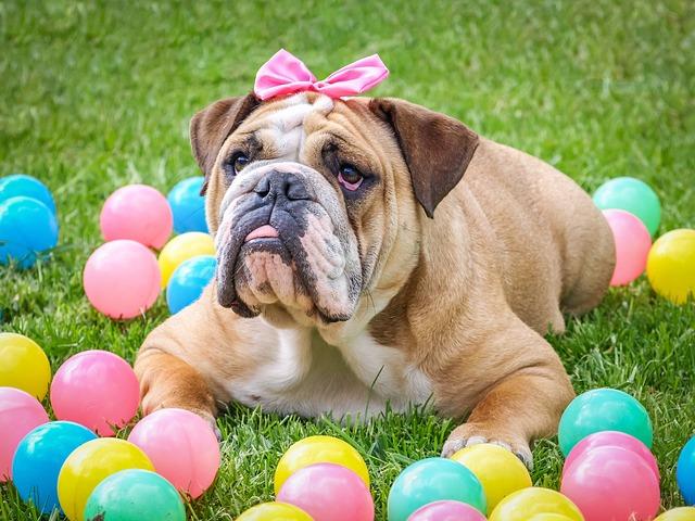Bulldog, Cute, Easter, Animal, Dog, Pet, Sweet