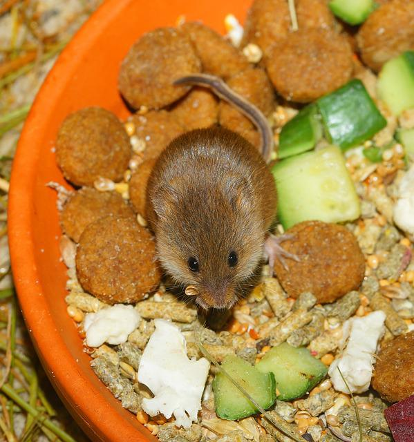 Dwarf Mouse, Cute, Food, Small, Vegetables, Nut