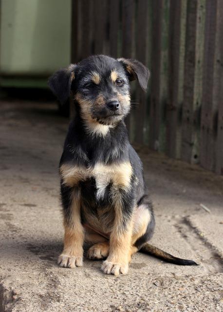 Puppy, Black, Funny, Portrait, Cute, Animals