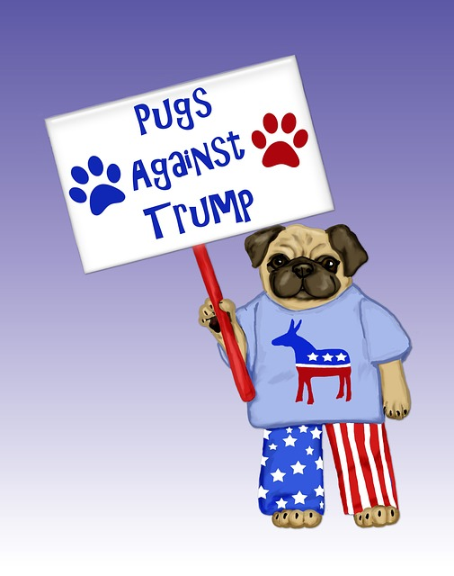 Pug, Pet, Dog, Cute, Funny, Pugs Against Trump, Trump