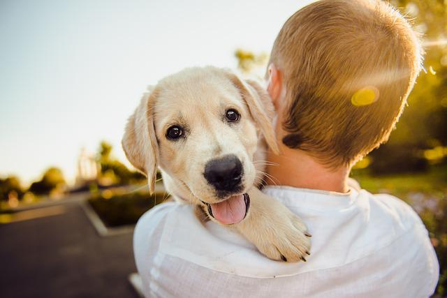 Adorable, Animal, Dog, Cheerful, Cute, Happiness, Happy