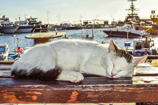 Cat, Sleeping, Outdoor, Cute, Animal, Kitten, Sweet