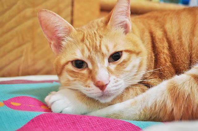 Kitty, Pets, Cute, Cat, Kitten