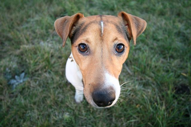 Dog, Animal, Cute, Mammal, Canine