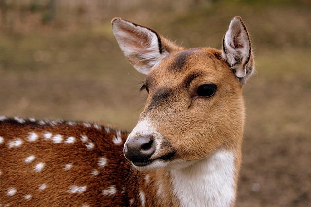 Mammal, Animal, Nature, Animal World, Wild, Cute