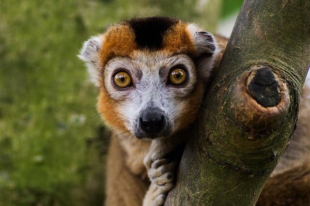 Nature, Animal, Wildlife, Mammal, Cute, Eye