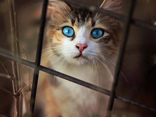 Cat, Nice, Blue Eyes, Funny, Cute, Animals