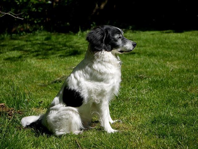 Dog, Grass, Animal, Mammal, Pet, Cute, Rush, Adorable