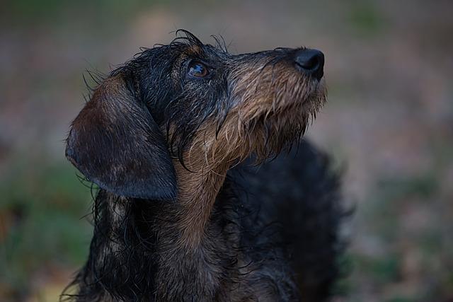 Animal, Dog, Pet, Cute, Playful, Breed, Adorable