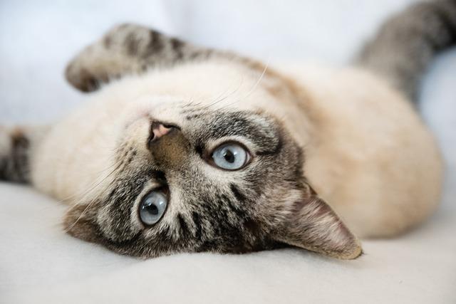 Animal, Cute, Pet, Mammal, Small, Cat, Tired, Lazy