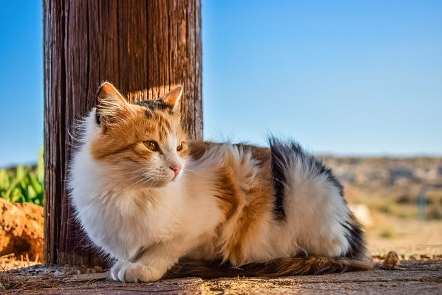 Cat, Stray, Animal, Cute, Mammal, Nature, Portrait
