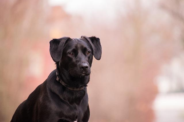 Portrait, Dog, Cute, Animal, Search