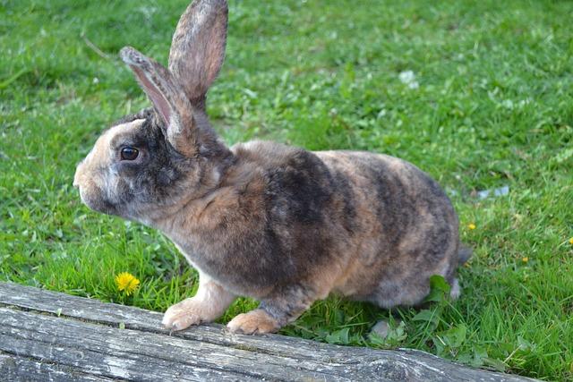 Rabbit, Animal, Herbivore, Cute, Grass, Fur, Ears