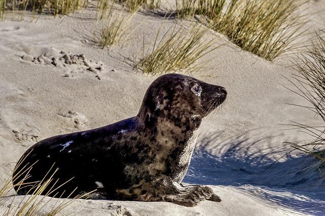 Robbe, Seal Baby, Seal, Concerns, Grey Seal, Cute