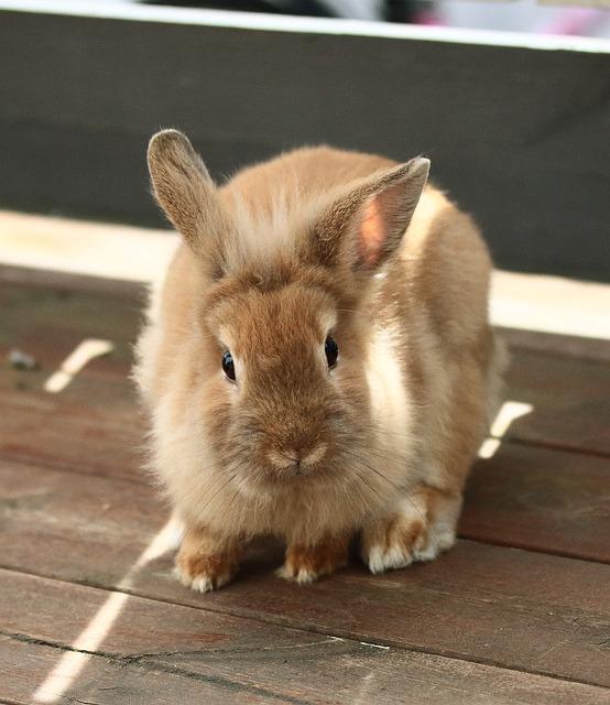 Rabbit, Altan, Animals, Beige, Cute, Soft, Ears, Rodent