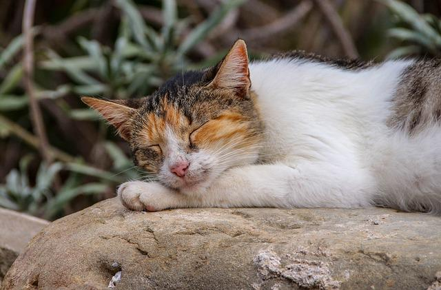 Cute, Animal, Rest, Sleeping, Cat, Lazy, Relax, Sleep