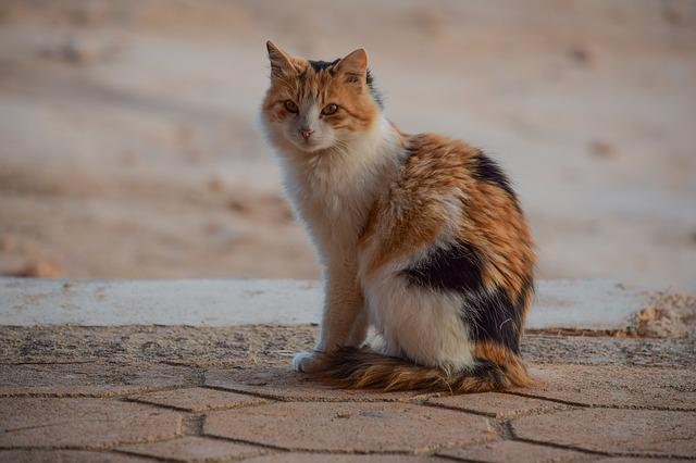 Cute, Animal, Looking, Nature, Cat, Stray, Portrait