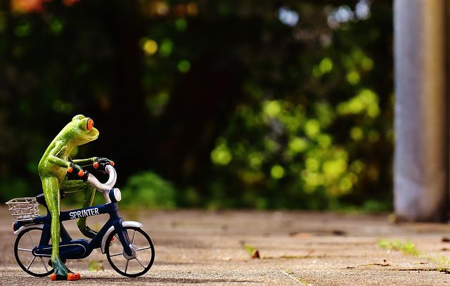 Frog, Bike, Funny, Cute, Sweet, Fig, Drive