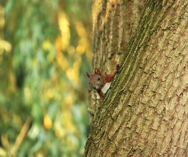 Squirrel, Tree, Pasture, Tribe, Animal, Mammal, Cute